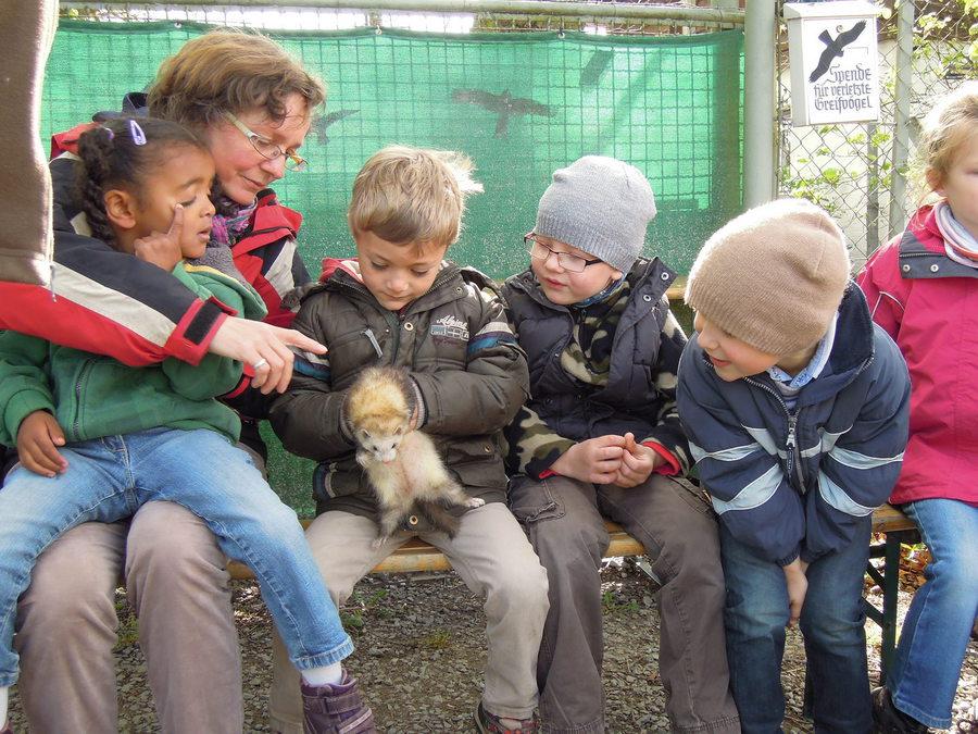 Waldkindergarten Wertheim e.V. - Vor(der)schule